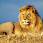 Четыре живых существа или полное откровение Иисуса -- Лев
